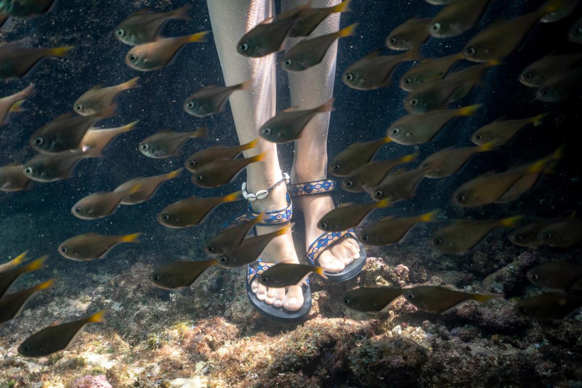 Explore the vibrant Ningaloo Reef